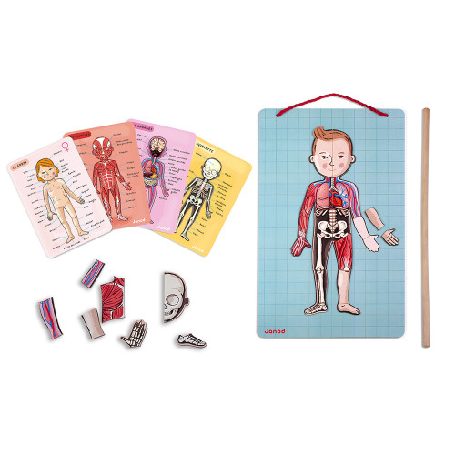 Body Magnet L'Anatomie - 12 langues, 76 magnets, magnétique, éducatif, corps humain, pour enfant à partir de 7 ans JANOD