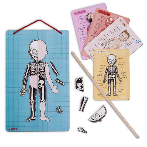 Body Magnet L'Anatomie - 12 langues