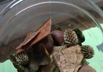 Atelier pédagogique – Le tableau végétal